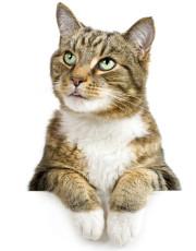 Katzenbaby, Kitten, Katzenpension