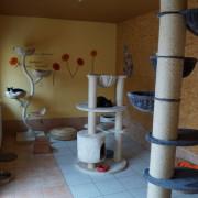 Der Katzenspielplatz in der Villa Mieze-Mau