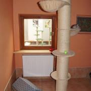 Ein Kletterbaum in der Villa Mieze-Mau
